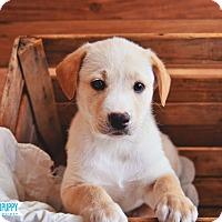 Adopt A Pet :: M & M - Peachtree City, GA