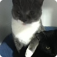 Adopt A Pet :: Precious - Caistor Centre, ON