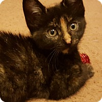 Adopt A Pet :: Lily - Mount Clemens, MI