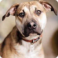 Adopt A Pet :: Chandler - Portland, OR