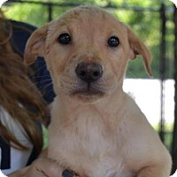 Adopt A Pet :: Kelly - Chester Springs, PA