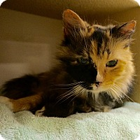 Adopt A Pet :: Patches - Salem, NH