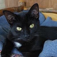 Adopt A Pet :: Gerard - Greenfield, IN
