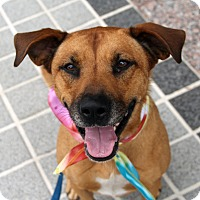 Adopt A Pet :: Cobie *Foster Me - Richmond, VA