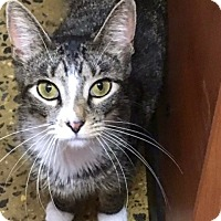 Adopt A Pet :: Mimi - Long Beach, NY