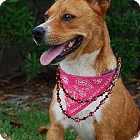 Adopt A Pet :: Angel - Sugar Land, TX