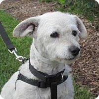 Adopt A Pet :: Hunter - Carlsbad, CA
