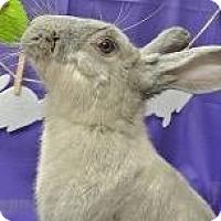 Adopt A Pet :: Lizzie - Woburn, MA