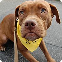 Adopt A Pet :: Angie - Wilmington, DE