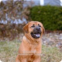 Adopt A Pet :: Bernard - Columbus, OH