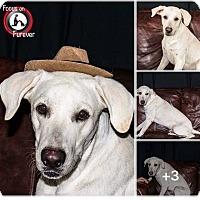 Adopt A Pet :: Jax - Austin, TX