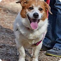 Adopt A Pet :: Bert - Asheville, NC
