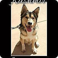 Adopt A Pet :: Kashmir - Clearwater, FL