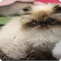 Adopt A Pet :: Bridget - El Cajon, CA