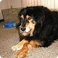 Adopt A Pet :: Debo - Saskatoon, SK