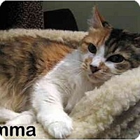 Adopt A Pet :: Emma - Portland, OR