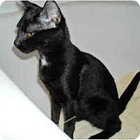 Adopt A Pet :: Aliani - Arlington, VA
