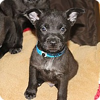 Adopt A Pet :: TURNER - Loxahatchee, FL