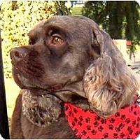 Adopt A Pet :: Jack - Tacoma, WA