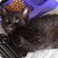 Adopt A Pet :: Lionel - Island Park, NY