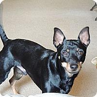 Adopt A Pet :: Jaxon (aka Jax) - Nashville, TN
