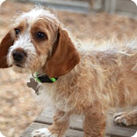 Adopt A Pet :: Fergus - adoption pending - Norwalk, CT