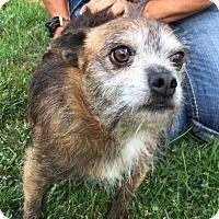 Adopt A Pet :: Porkchop - Carey, OH