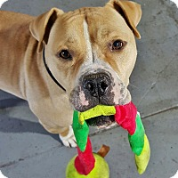 Adopt A Pet :: King - Brooklyn, NY