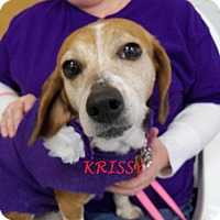 Adopt A Pet :: KRISSY - Ventnor City, NJ