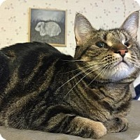 Adopt A Pet :: Annie (cat)-Fostered - Rustburg, VA