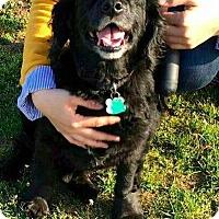 Adopt A Pet :: Jo Jo - Flushing, NY