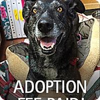 Adopt A Pet :: Emma 211154 - Petaluma, CA