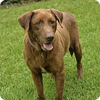 Adopt A Pet :: Queen - San Antonio, TX