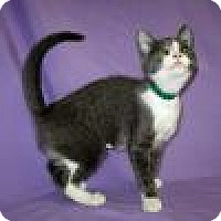 Adopt A Pet :: Greatel - Powell, OH