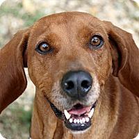 Adopt A Pet :: Ruby - Breinigsville, PA