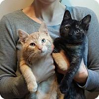 Adopt A Pet :: Arceus - Cherry Hill, NJ