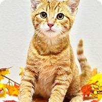 Adopt A Pet :: Dax - Dublin, CA