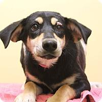 Adopt A Pet :: Gabriella - Waldorf, MD
