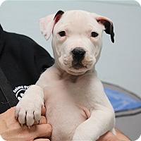 Adopt A Pet :: Newton - Elyria, OH