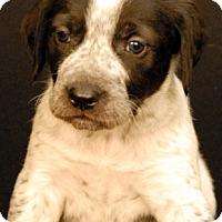 Adopt A Pet :: Beeler - Newland, NC