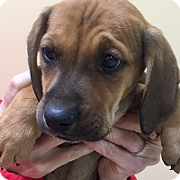 Adopt A Pet :: Prancer - Oswego, IL