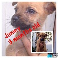 Adopt A Pet :: Jimmy - LAKEWOOD, CA