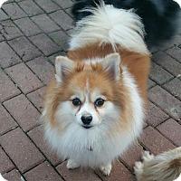 Adopt A Pet :: Gidget - Delaware, OH