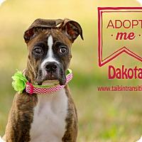 Adopt A Pet :: Dakota - Friendswood, TX