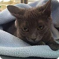 Adopt A Pet :: Ruby - Modesto, CA