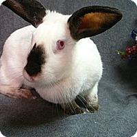 Adopt A Pet :: Felice - Newport, DE