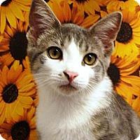 Adopt A Pet :: Robson - Albany, NY