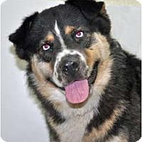 Adopt A Pet :: Dudley - Port Washington, NY