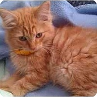 Adopt A Pet :: Merlin (KL) - Little Falls, NJ
