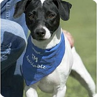 Adopt A Pet :: BLACKJACK - Phoenix, AZ